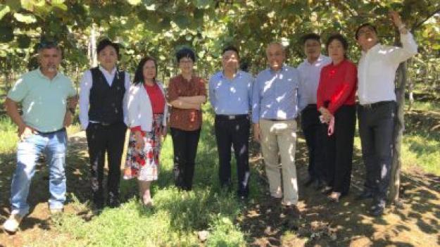 Equipo de profesionales la Academia de Ciencias de Jiangxi de China, recorriendo huertos de kiwi junto a Presidente del Comité del Kiwi de Chile